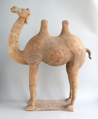 LARGE Chinese Tang Dynasty Painted Pottery Camel with TL Test (75cm)