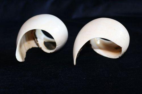 Conch Shell Bracelets