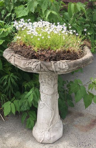 Vintage concrete bird bath with trailing vine motif