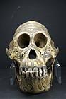 Rare Orang-Outang Adorned Skull, Dayak Peoples