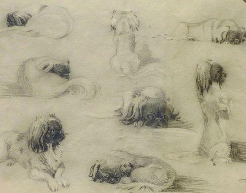 Dog art fine 1925 signed pencil study drawing of Pekinese