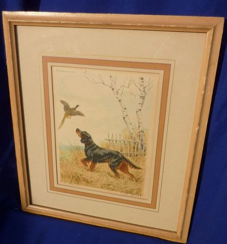 Sporting art etching of a setter flushing pheasant by listed artist Paul Wood