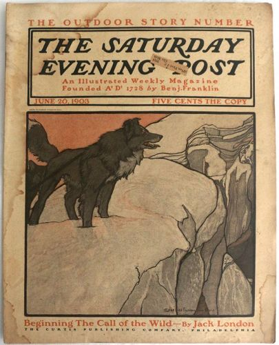 Saturday Evening Post June 20 - July 18 1903 Call of the Wild