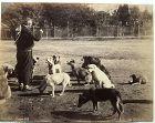Albumen photo Abdullah Freres Istanbul street dogs c. 1880