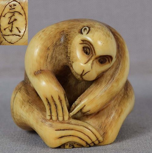 19c netsuke MONKEY looking for fleas by RANICHI