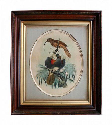 Josef Smit Antique Bird Print in Exceptional Antique Frame