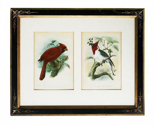 J. G. Keulemans Original Hand Colored Lithographs, Antique Frame