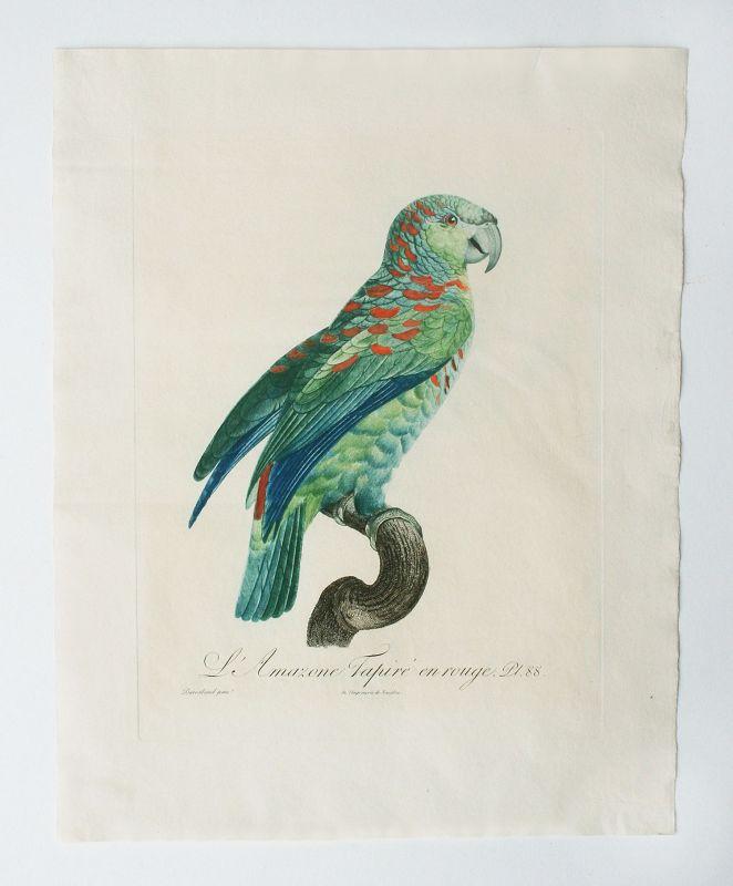 Jacques Barraband Hand Colored Engraving, 1805, RARE ORIGINAL