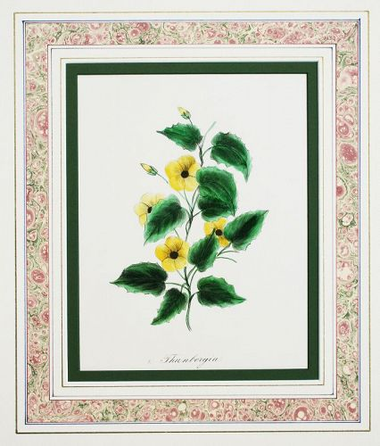 ORIGINAL Hand Colored Lithograph, Botanical Print, Laura Munson