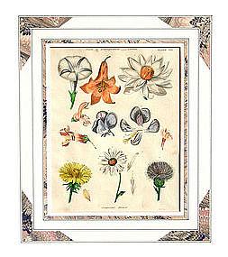 Botanical Engraving