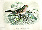 Hand Colored Lithograph by John Keulemans