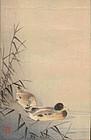 Ohara Koson Japanese Woodblock Print - Ducks - Rare Uncatalogued