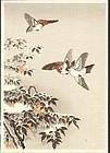 Tsuchiya Koitsu Woodblock Print - Sparrows SOLD