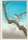 Tsuchiya Koitsu Japanese Woodblock Print - Plum Warbler