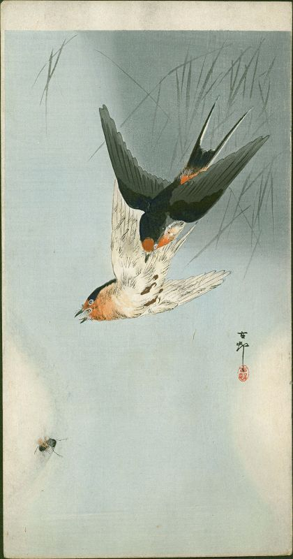 Ohara Koson Japanese Woodblock Print -Two Barn Swallows in Flight SOLD