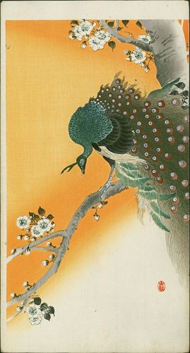 Ohara Koson Japanese Woodblock Print Peacock on Flowering Cherry RARE