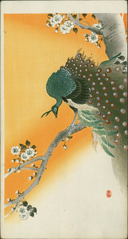 Ohara Koson Japanese Woodblock Print - Peacock Flowering Cherry Rare