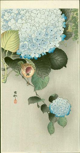 Ohara Koson Japanese Woodblock Print - Sparrow on Hortensia SOLD