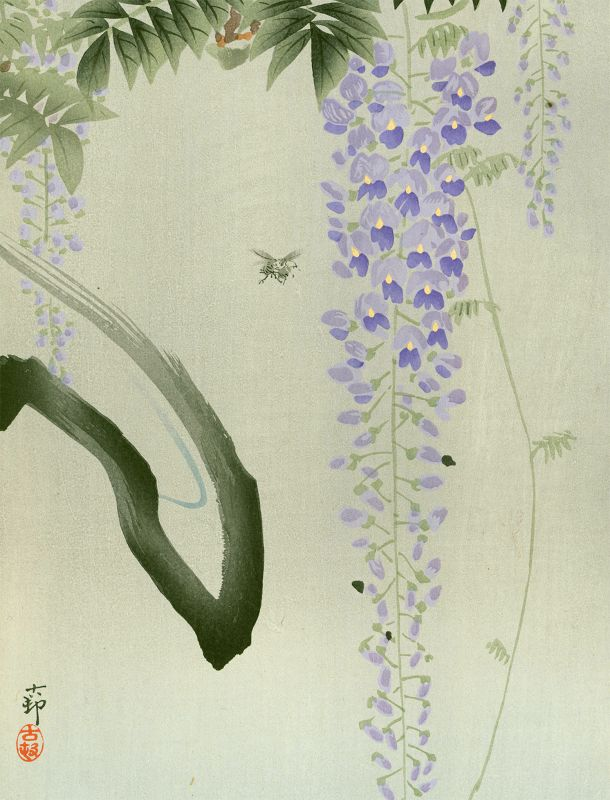 Ohara Koson Japanese Woodblock Print - Insect and Flowering Wisteria
