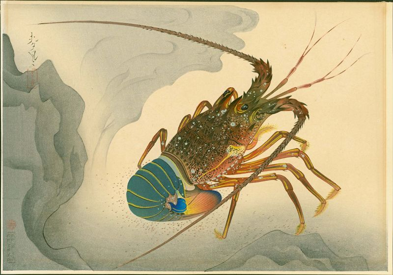 Ohno Bakufu Japanese Woodblock Print - Spiny Lobster - Familiar Fishes