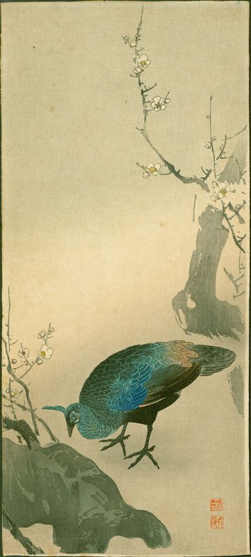 Ito Sozan Peahen and Plum Tree Japanese Woodblock Print - Rare