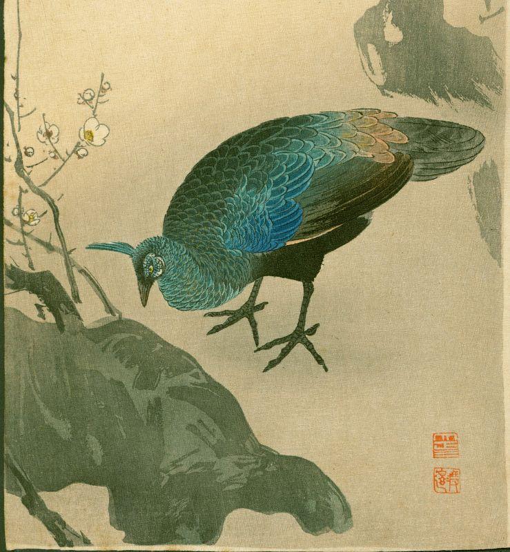 Ito Sozan Peahen and Plum Tree Japanese Woodblock Print - Rare
