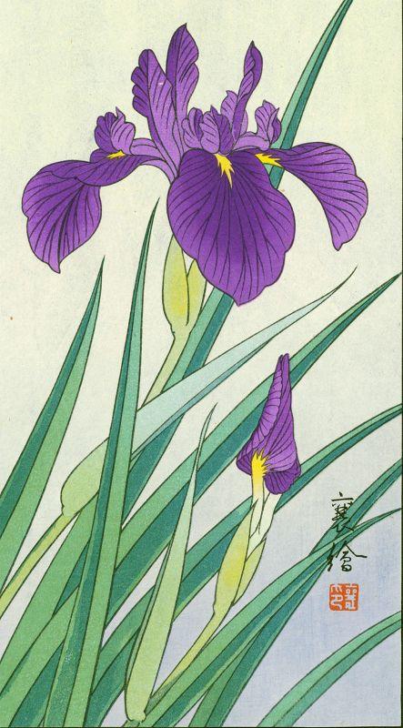 Hashimoto Yuzuru (Jo) Japanese woodblock Print - Swallow and Iris