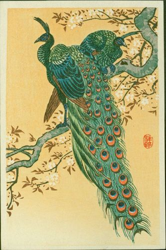 Ohara Koson (Shoson) Woodblock Print - Peacock and Peahen Cherry SOLD