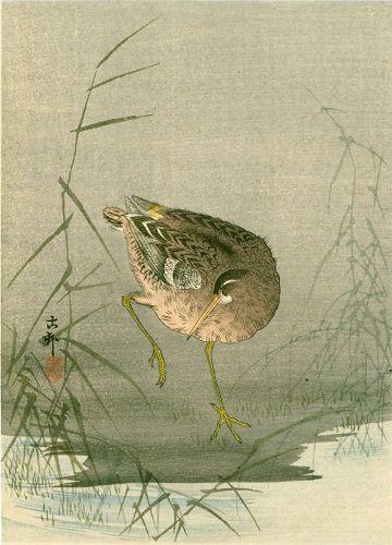 Ohara Koson Japanese Woodblock Print - Snipe at Waterside 1910