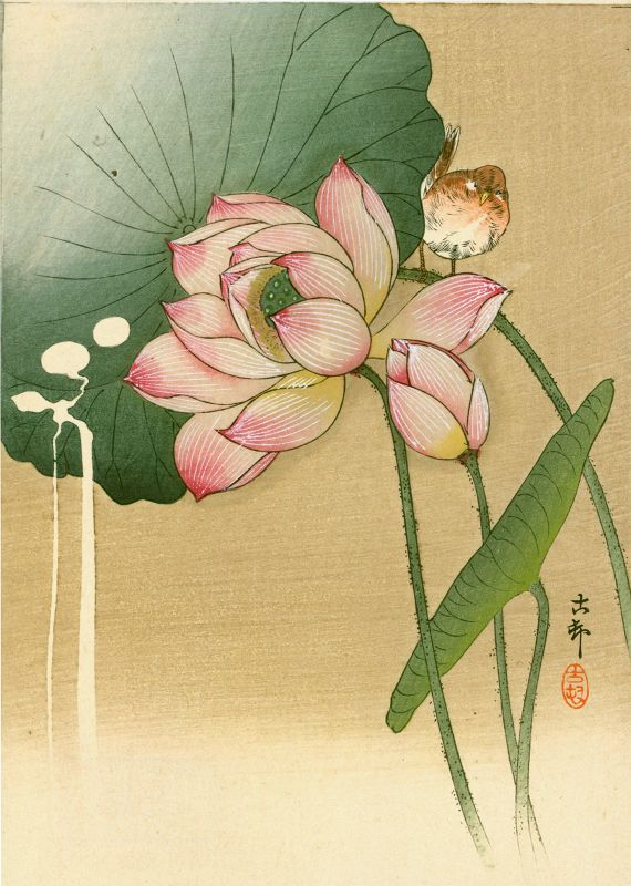 Ohara Koson Japanese Woodblock Print -Songbird and Lotus 1910 SOLD