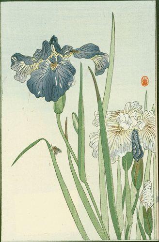 Yamagishi (After) Ohara Koson Woodblock Print - Iris and Bee 1910 SOLD