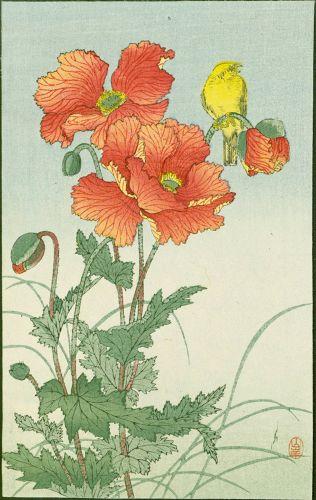 Yamagishi / Ohara Koson Woodblock Print - Poppies and Bird 1910 SOLD