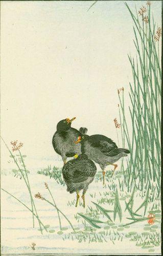 Yamagishi (After?) Ohara Koson Woodblock Print - Three Birds 1910
