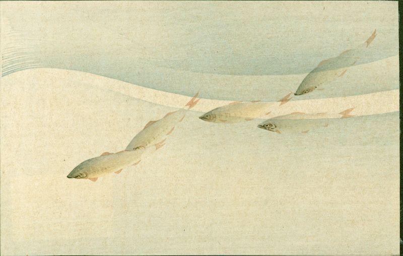 Aoki Seiko Japanese Woodblock Ayu Fish In the Stream - 1910