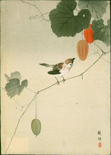 Ohara Koson Woodblock Print - Sparrow on Vine of Wild Melon- 1910 Rare