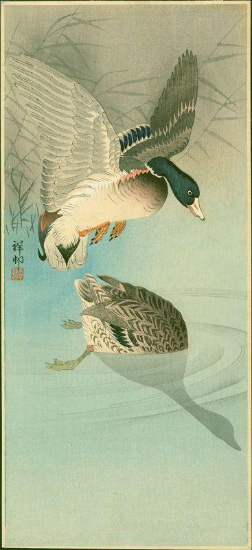 Ohara Koson (Shoson) Japanese Woodblock Print- Two Wild Ducks