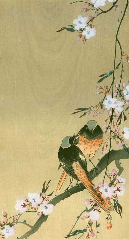 Ohara Koson Japanese Woodblock Print - Redstarts on Cherry Branch