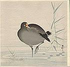 Ohara Koson Woodblock Print - Gallinule 1910s SOLD