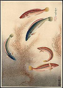 Onno Bakufu Fish Series Woodblock - Seawife (Bera)