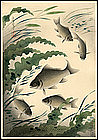 Onno Bakufu Fish Series Woodblock - Crucian (Funa)