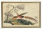 Chinese Bird & Flower Pith Paper Painting #3, 19th C.
