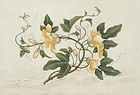 Framed Chinese Pith Paper Painting w. Hibiscus, 19th C.