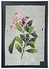 Chinese Botanical  Pith Paper Painting, 19th C.