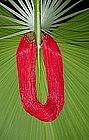 Naga, Antique Red Multi-strand Necklace