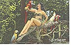 Linen Postcard, Parrot Jungle, Woman In Tree w/ Parrots