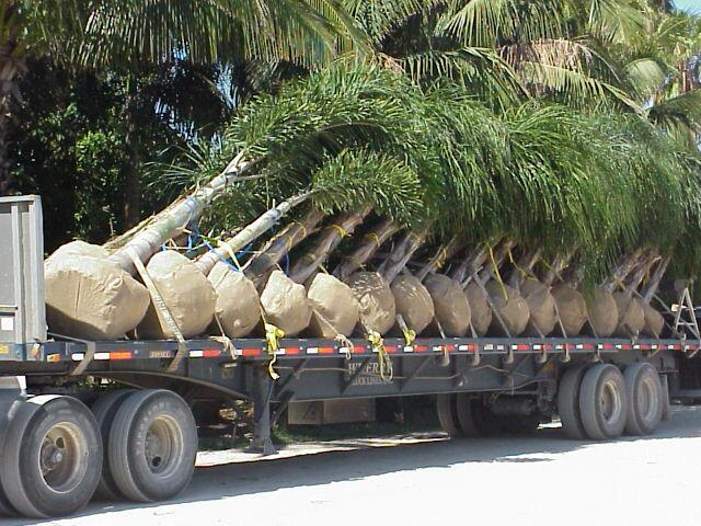 Rare Palms, By the truck load