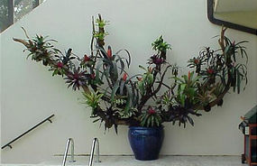 Bromeliad's and Bromeliad Logs