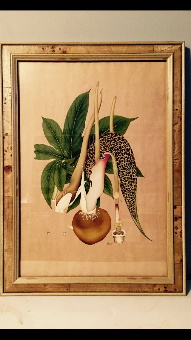 Antique Medicinal Plant Botanical, India
