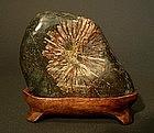 Japanese Natural Viewing Chrysanthemum Stone