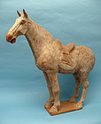 Tang dynasty Pottery Horse